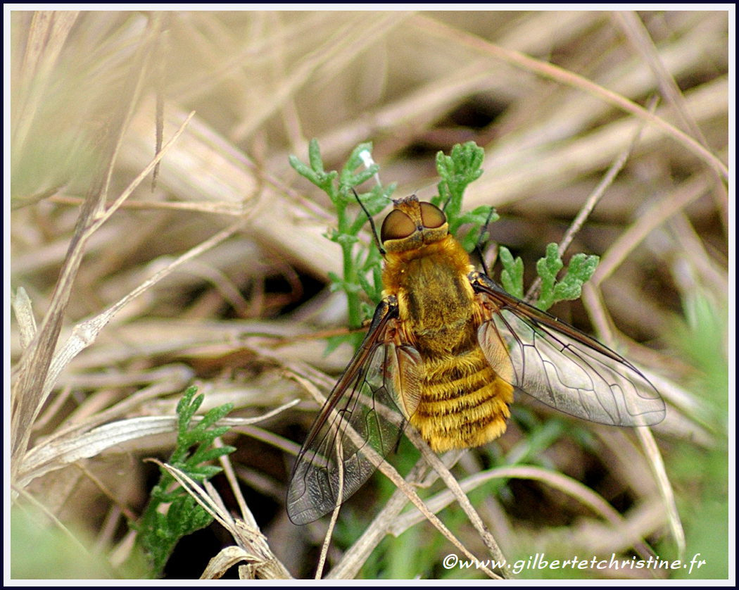 Insectes 0134