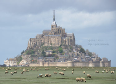 moutons-des-pres-sale-mont-saint-michel